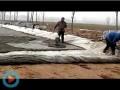 翠绿藕业视频2