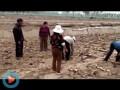 翠绿藕业视频3