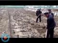 翠绿藕业视频4