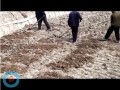 翠绿藕业视频6
