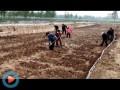 翠绿藕业视频7