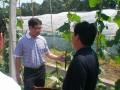 09年6月农业部促进处处长陈志群来商南视察指导工作 (3)