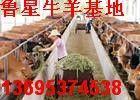 山东鲁星牧业牛羊养殖场