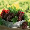 野葡萄珍珠红