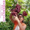 葡萄采摘园