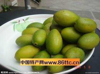 橄榄树上接的果能生吃吗?