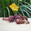 纯天然野生红菇干货