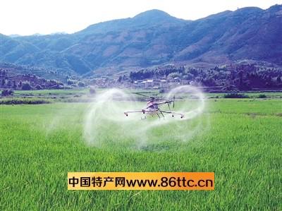 武夷山农民用飞机灭虫