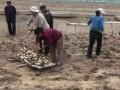 翠绿藕业视频11