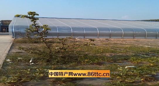 山东省淄博市淄川区莲花山养蝎基地创建于1998年7月。多年来,我们坚持养殖方式的创新和循环经济,始终把根基建立在自己养殖上,继而带动加盟客户的成功。我们建起了国内领先,与众不同的多功能自动控温、控湿的生态和环保科技含量很高的复合型大棚三座。中央电视台军事/农业频道《科技苑》栏目曾做过专题报道,详细介绍了我们基地养蝎子情况。