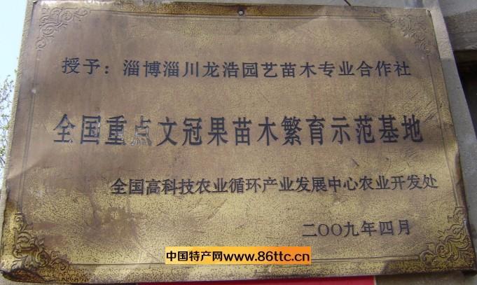 文冠果苗木,紫府仙缘有女主吗,word求和符号,卖